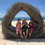 Foto de Anemona de Mar Beach