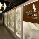 Oasis Bar & Grill照片