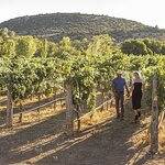 Bliss Wine Tours - The Most Luxurious Vineyard Tour in Sedona