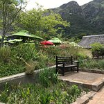 Kirstenbosch Tea Room Restaurant Foto