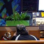 Doggie restaurant. Disgusting.