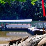 Kuranda Riverboat Sightseeing Cruise