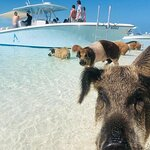 Exuma Powerboat Tour from Nassau
