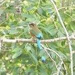 Sian Ka'an & Birdwatching Tours By Eddy