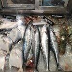 Fish showcase