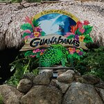. Guanabanas is a 100 percent open-air restaurant and bar with woven tiki huts and banyan trees
