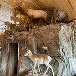 Bar N Ranch Restaurant照片