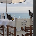 Pigeons on your table just before you arrive to eat