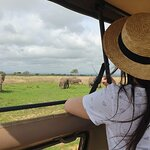 Private Full-Day Trip to Mikumi National Park from Dar es Salaam