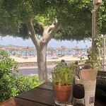 Bilde fra The Olive Tree Mallorca