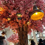 One of the beautiful trees in the restaurant