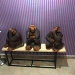Φωτογραφία: Monkey Steakhouse & Restaurant