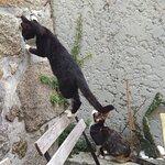 Fotografia de O Porto dos Gatos
