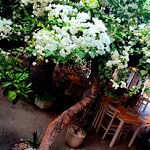 Фотография Ithaki Garden