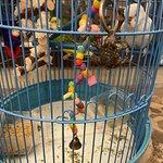 Вся вода в птичьих какашках