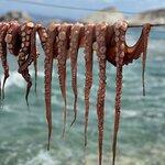 Φωτογραφία: Medusa