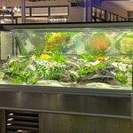 Zoi Fish Restaurant resmi