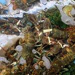 صورة فوتوغرافية لـ The Lobster House