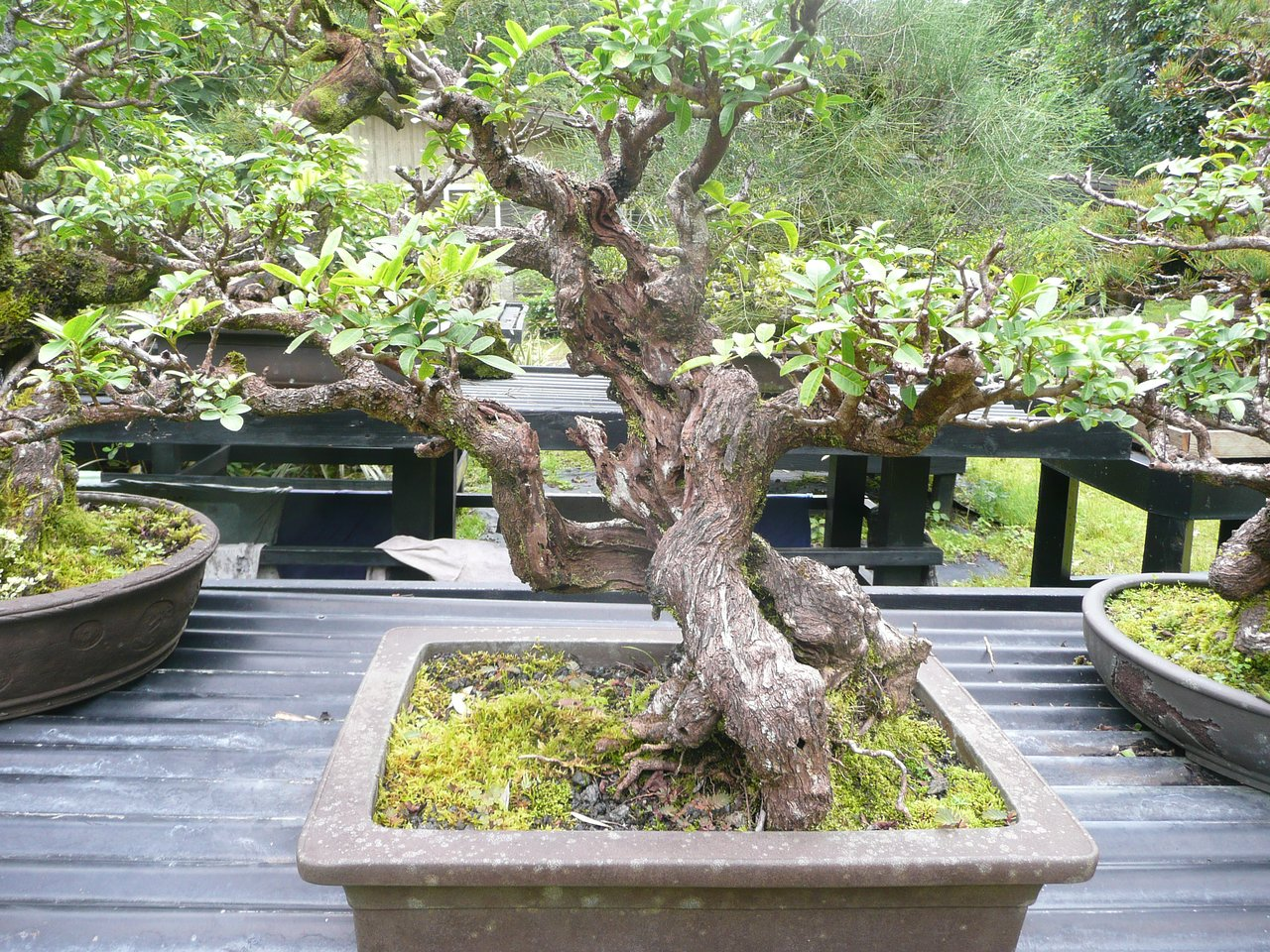 Fuku Bonsai Cultural Center Kurtistown 2021 All You Need To Know Before You Go With Photos Tripadvisor