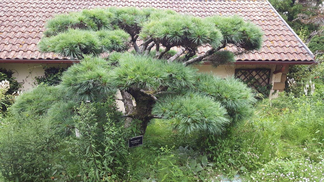Allée De Niert Bayonne jardin botanique (bayonne) - 2020 all you need to know