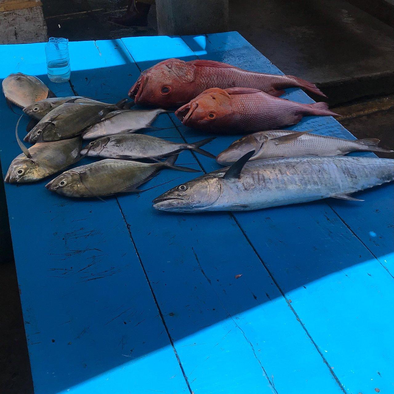 Negombo Fish Market Aktuelle 2019 Lohnt Es Sich Mit Fotos