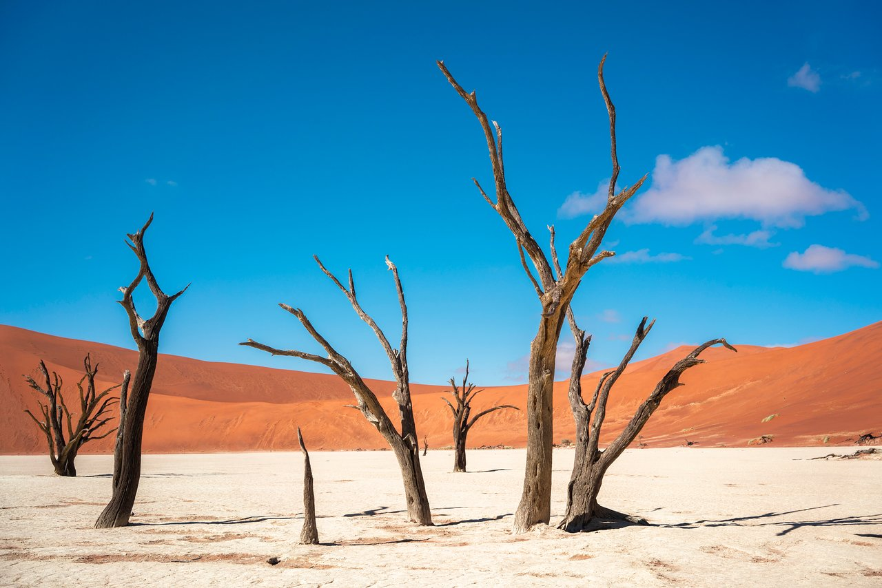 Deadvlei (Sossusvlei) - All You Need to Know BEFORE You Go - Updated 2021  (Sossusvlei, Namibia) - Tripadvisor