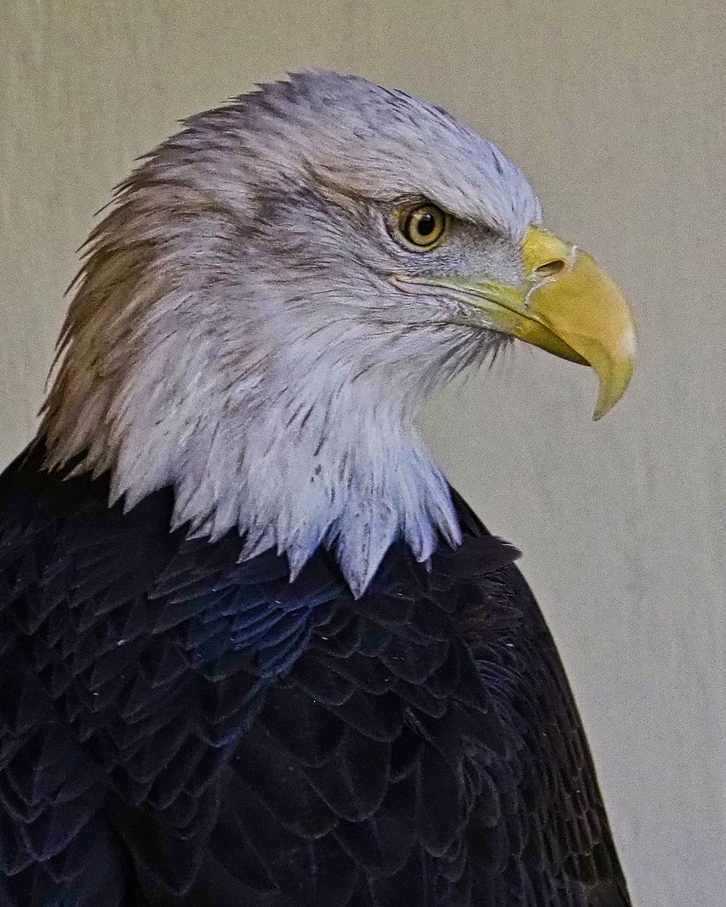 World Center For Birds Of Prey Boise 2020 All You Need To Know Before You Go With Photos Tripadvisor