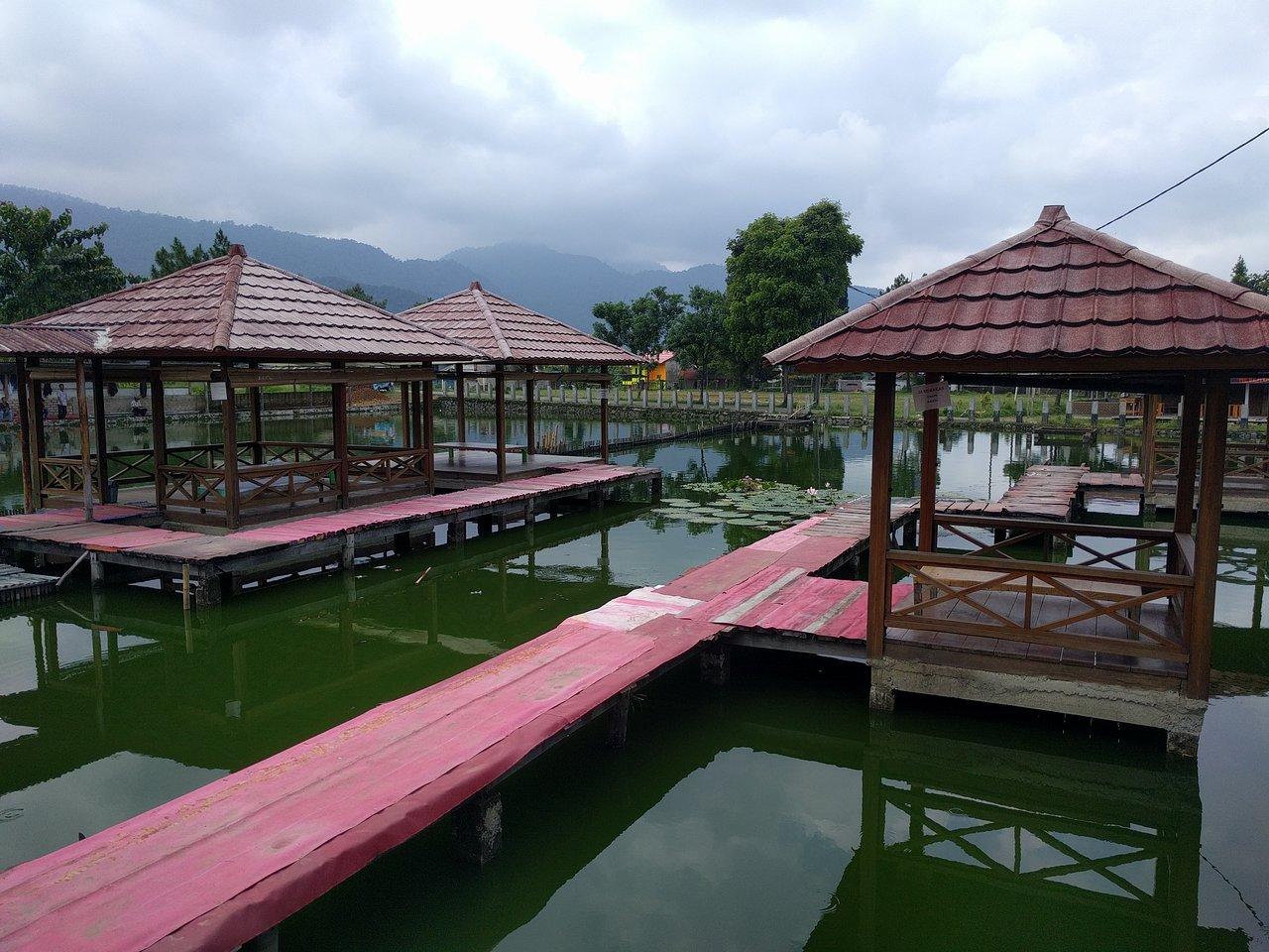Saung De Salak Homestay yang asri dan kolam berwarna hijau