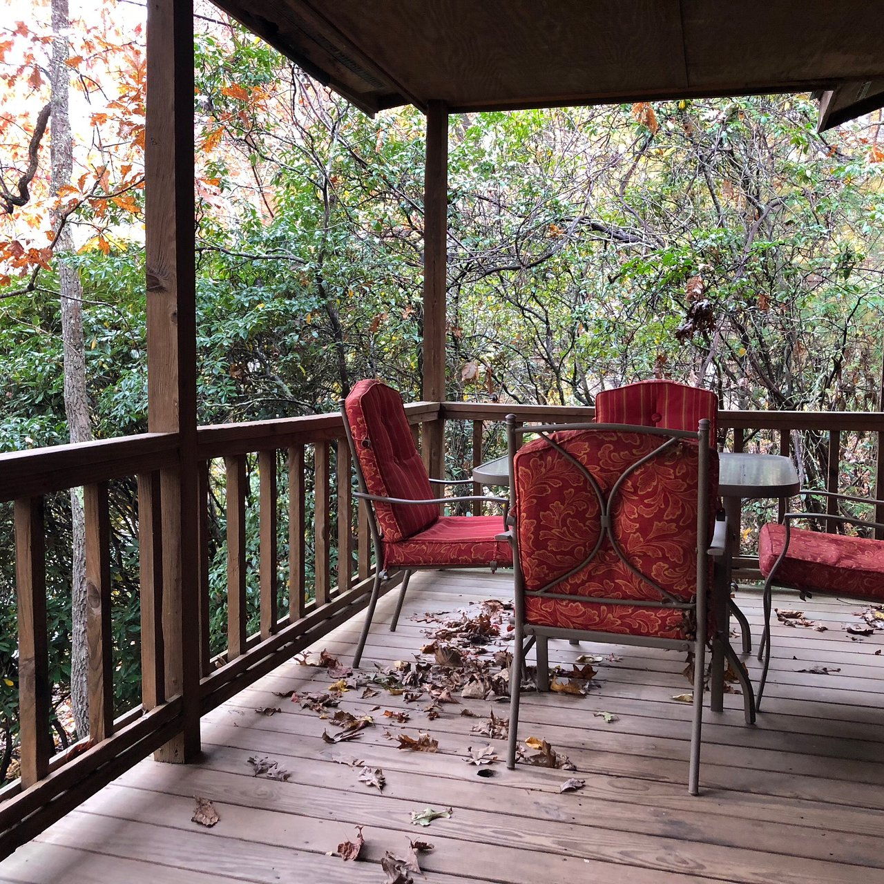 mountain springs cabins - prices & campground reviews (candler, nc