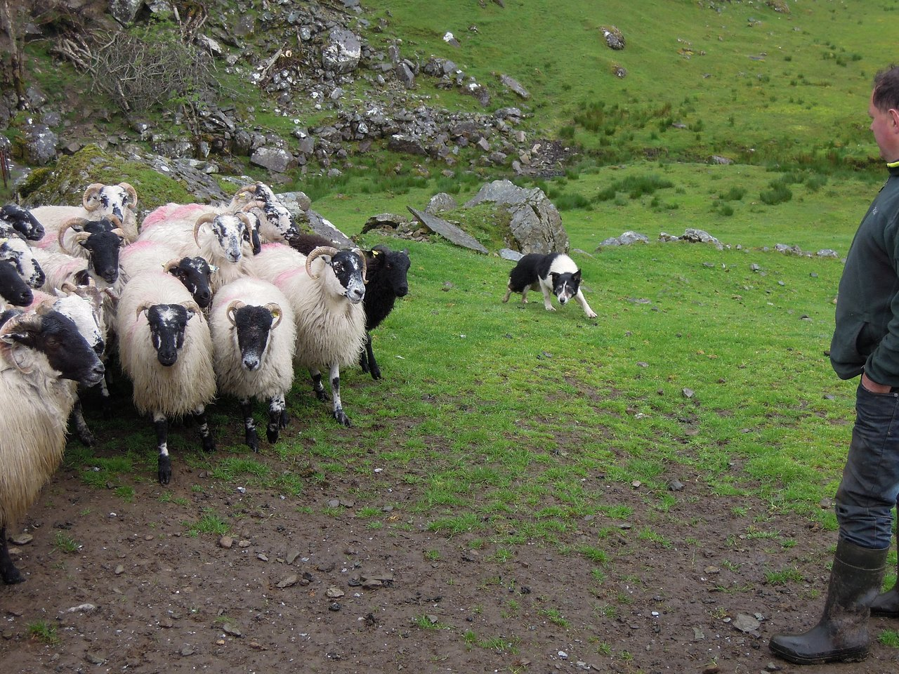 Kissane Sheep Farm (County Kerry) - County Kerry, Ireland