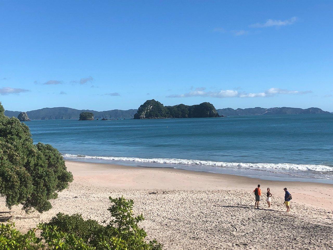 Hahei Beach Walk 2020 All You Need To