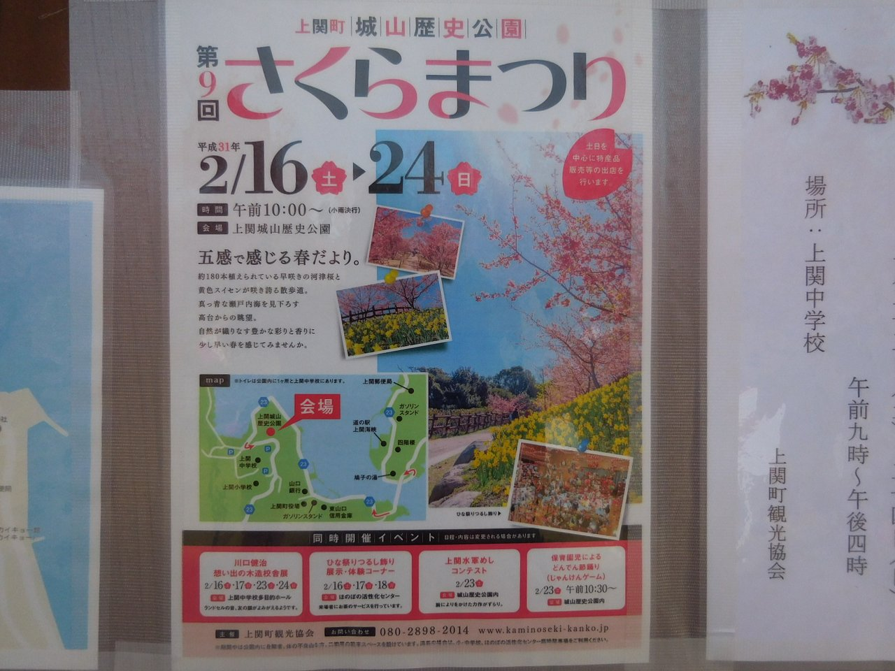 上関 河津 桜 2020