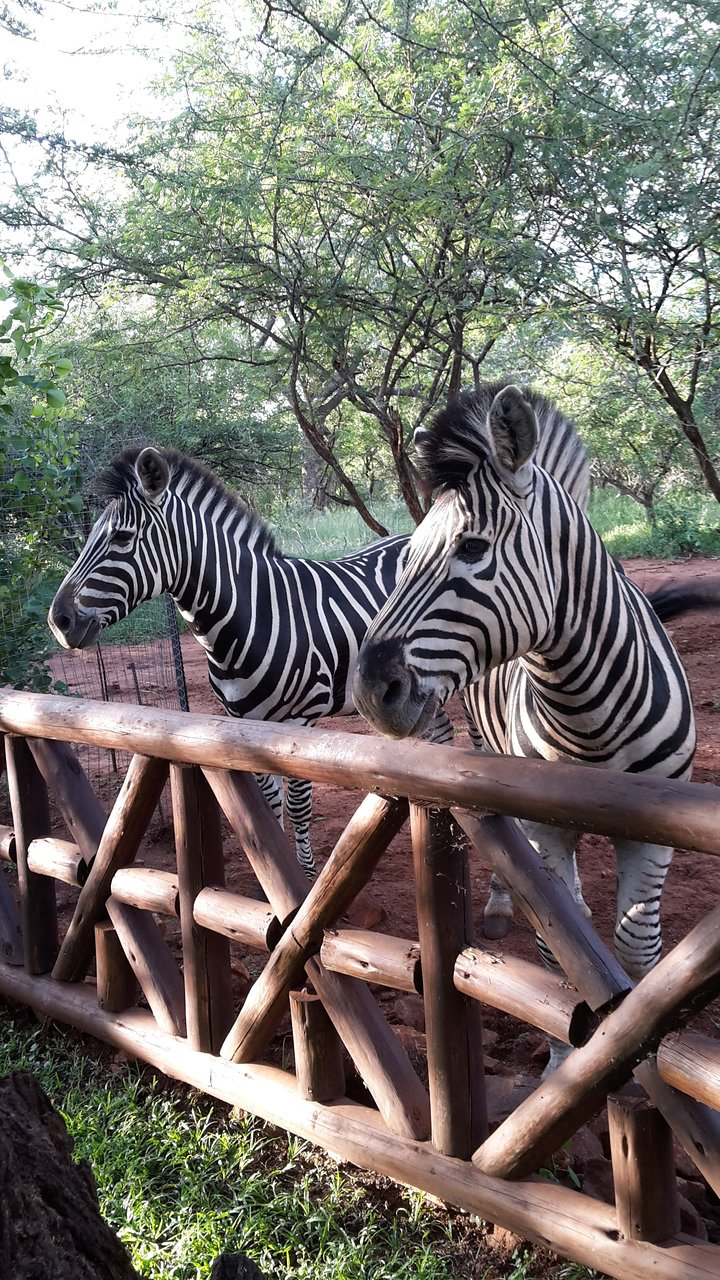 Speed Dating Zebra Augsburg Xojane Mandy Randki
