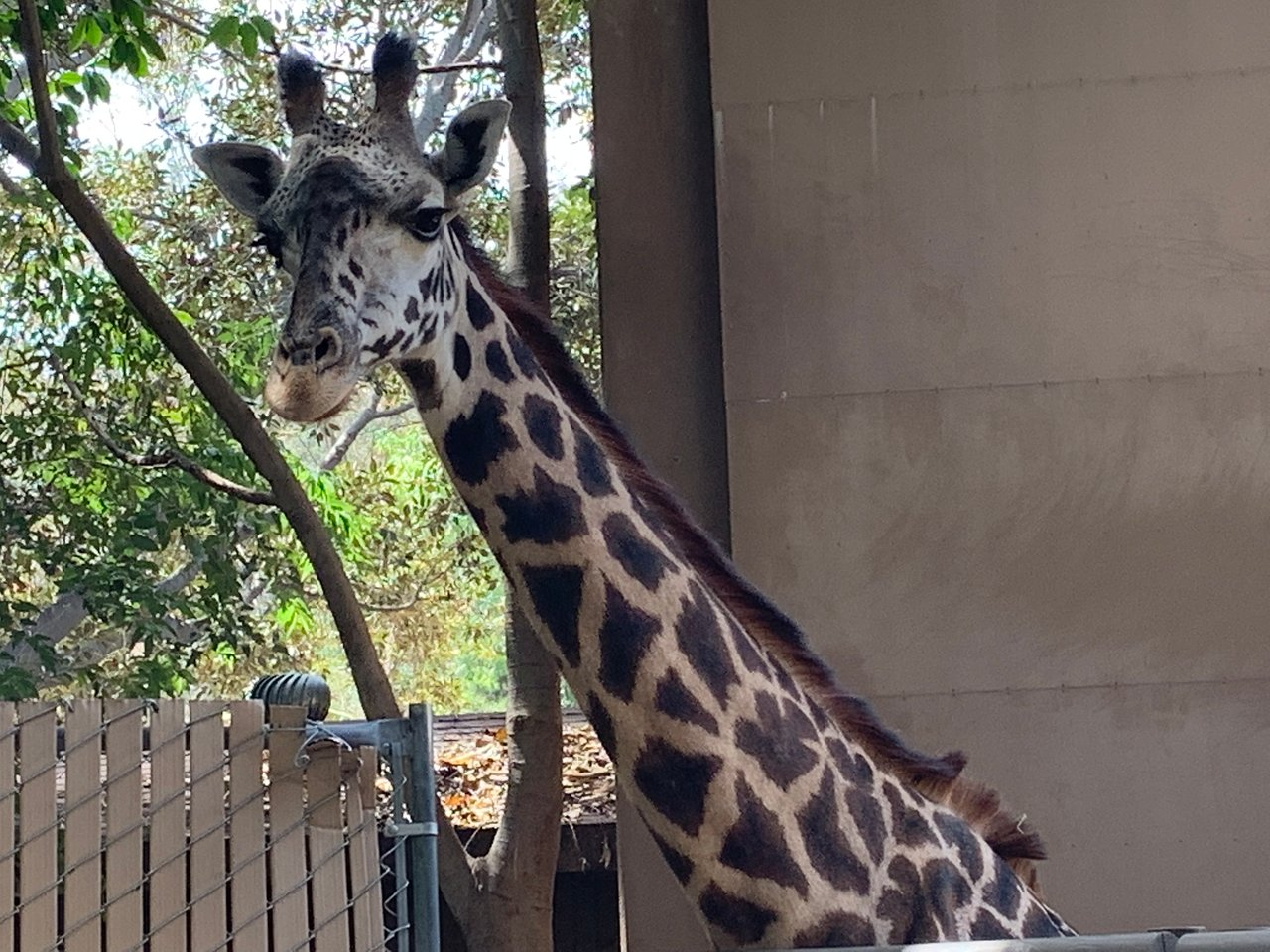 Los Angeles Zoo Botanical Gardens 2020 All You Need To Know Before You Go With Photos Tripadvisor