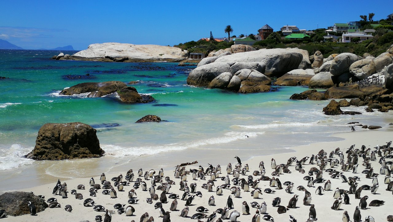 Boulders Beach Penguin Colony (Simon's Town) - 2020 All You Need ...