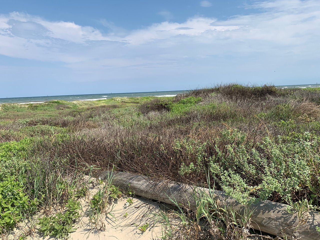 Mustang Island State Park Port Aransas 2020 All You Need To Know Before You Go With Photos Tripadvisor