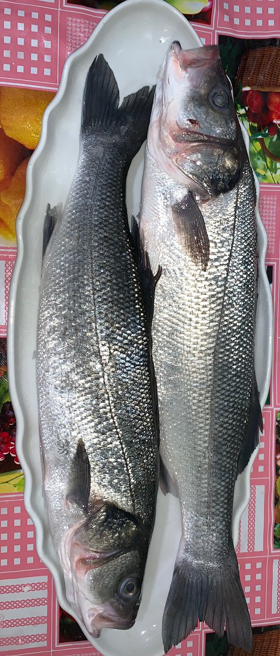 Fresh Sea Bass 1-1.2 kg