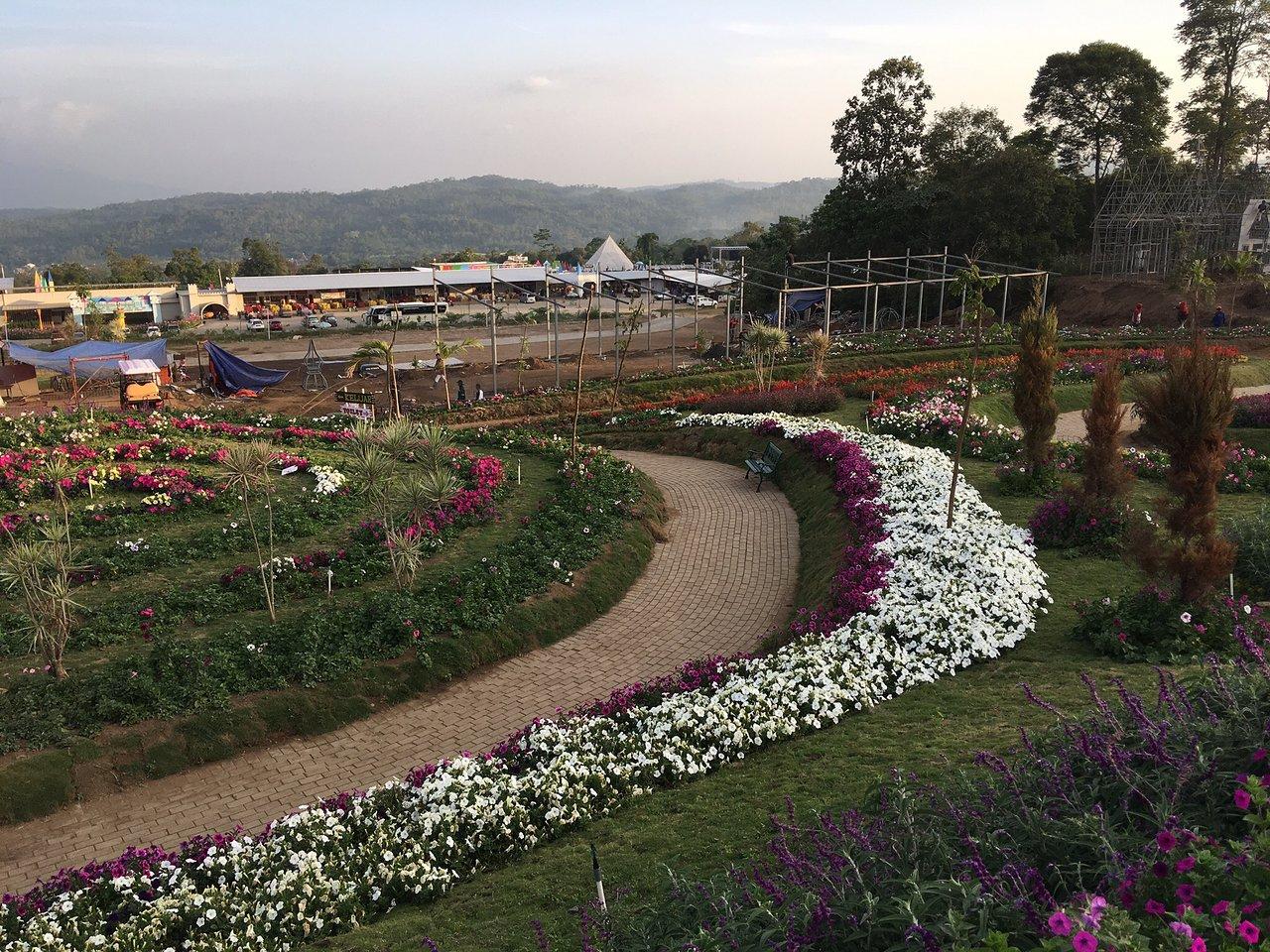 Celosia Flower Garden Bandungan 2020 All You Need To