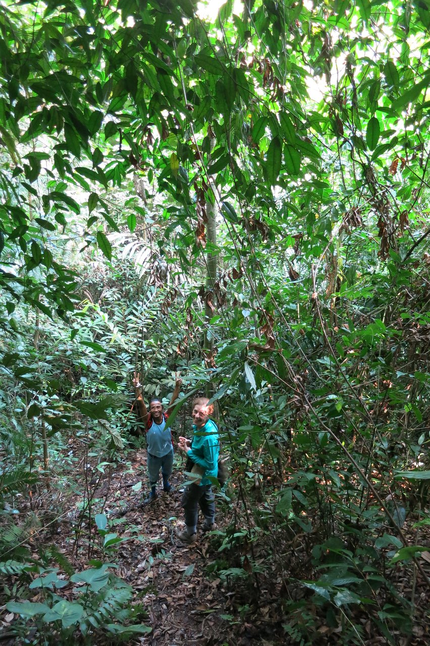 Orchid Bungalow Batu Katak Prices Lodge Reviews Bohorok