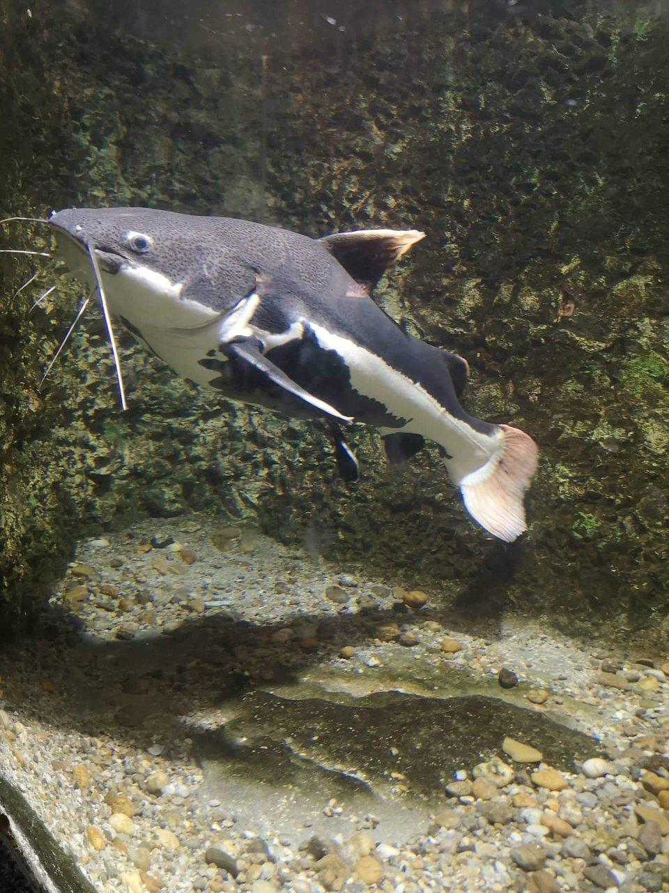 Žraloci datování