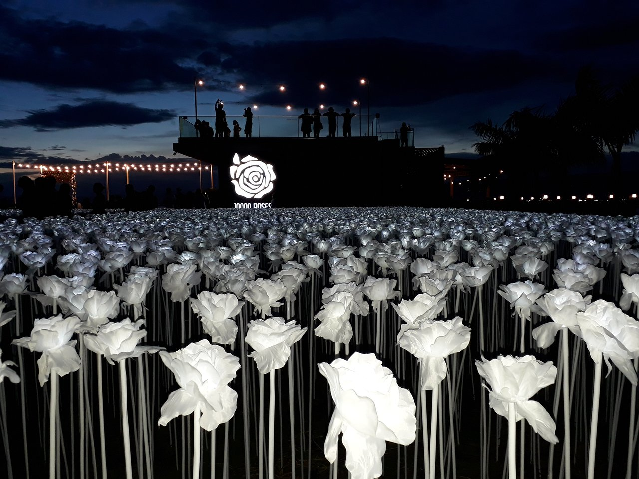 白いバラがかわいい10,000カフェ
