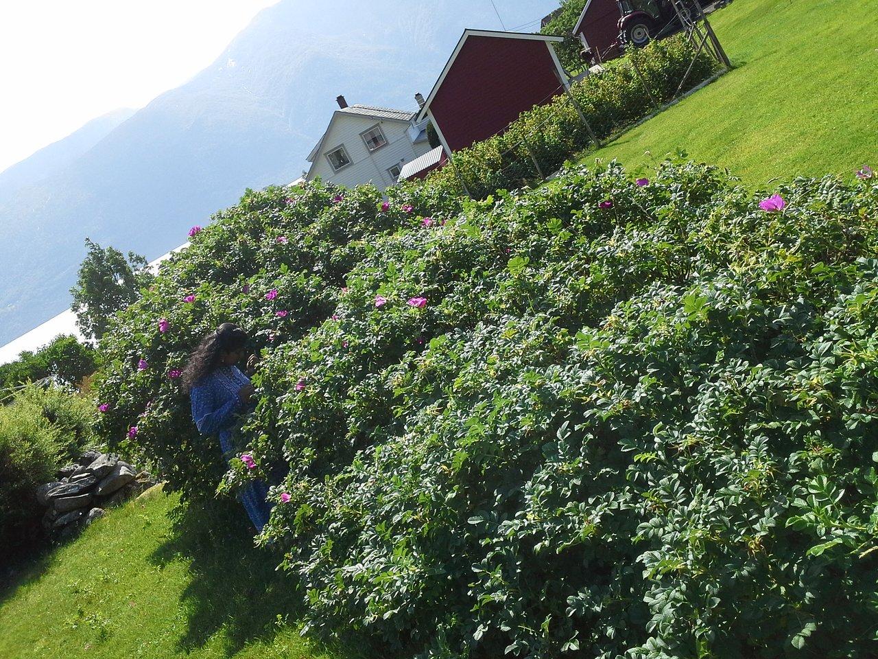 Camping med telt. Anmeldelse av Nygard Camping, Hjelle