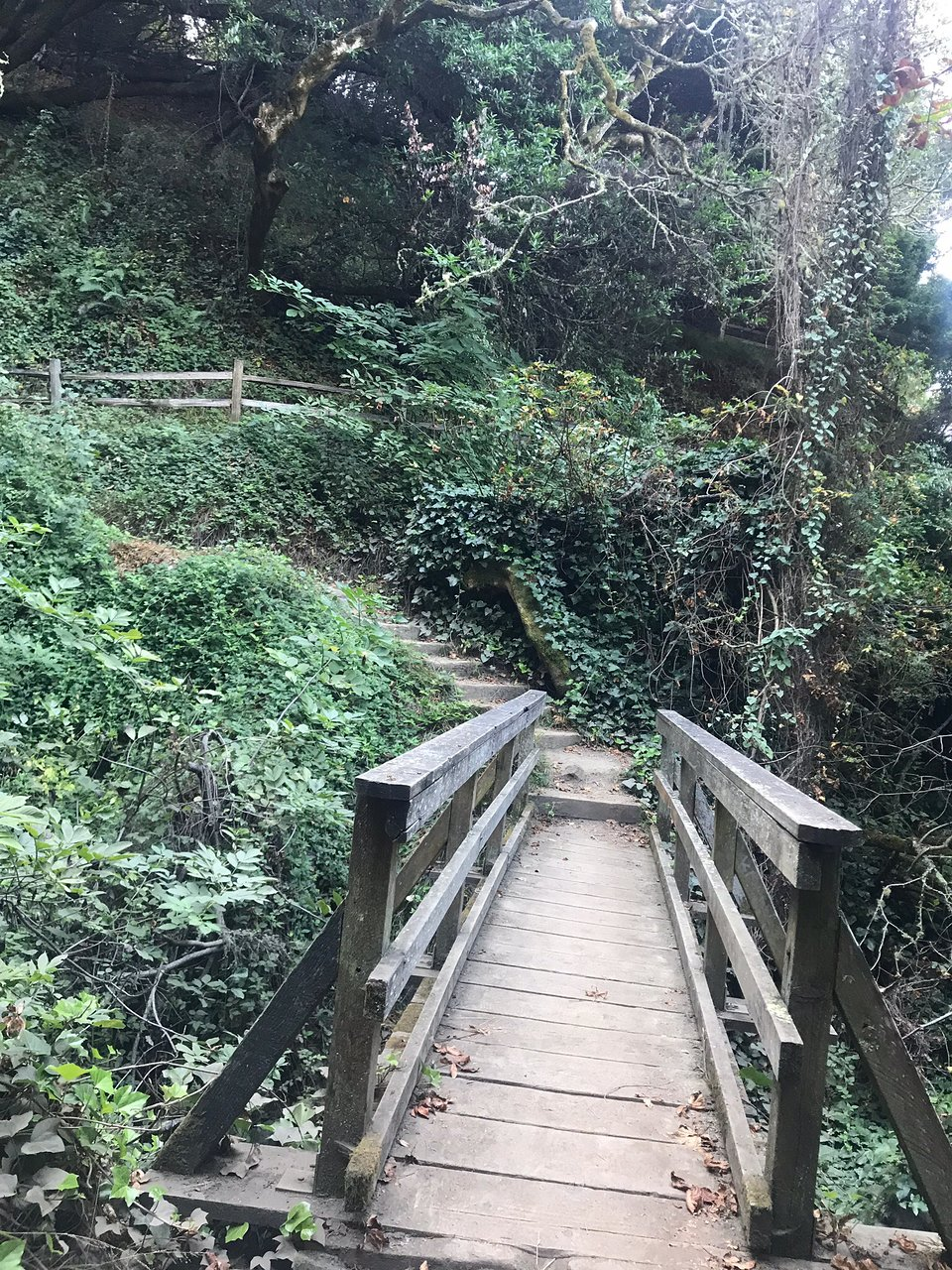 Dipsea Trail Mill Valley 2020 All