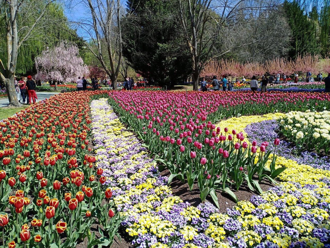 tulip top garden on 28 - Tulip Top Gardens 2019 Tulip Top Gardens 5 October