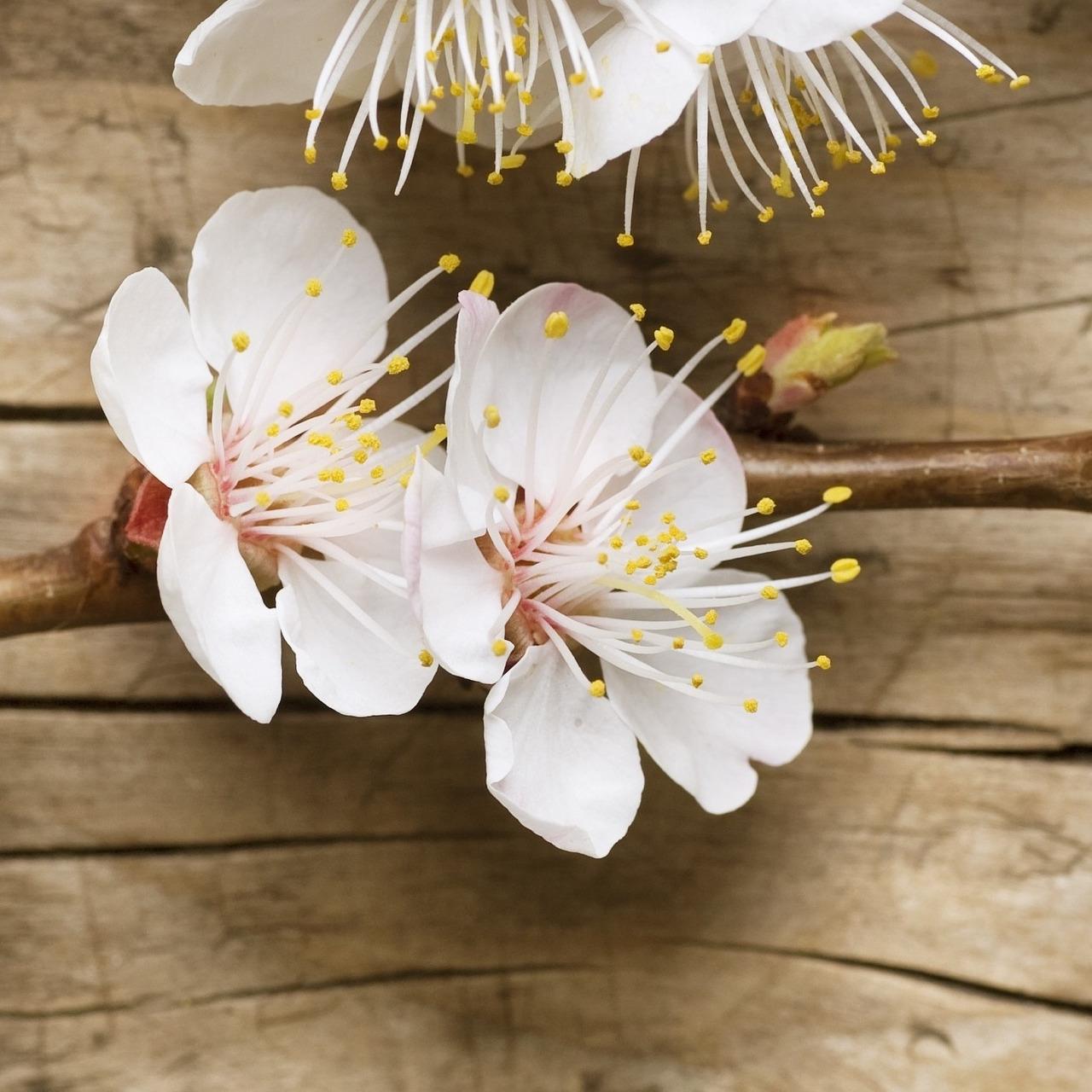 Cherry blossom.com online dating stránok