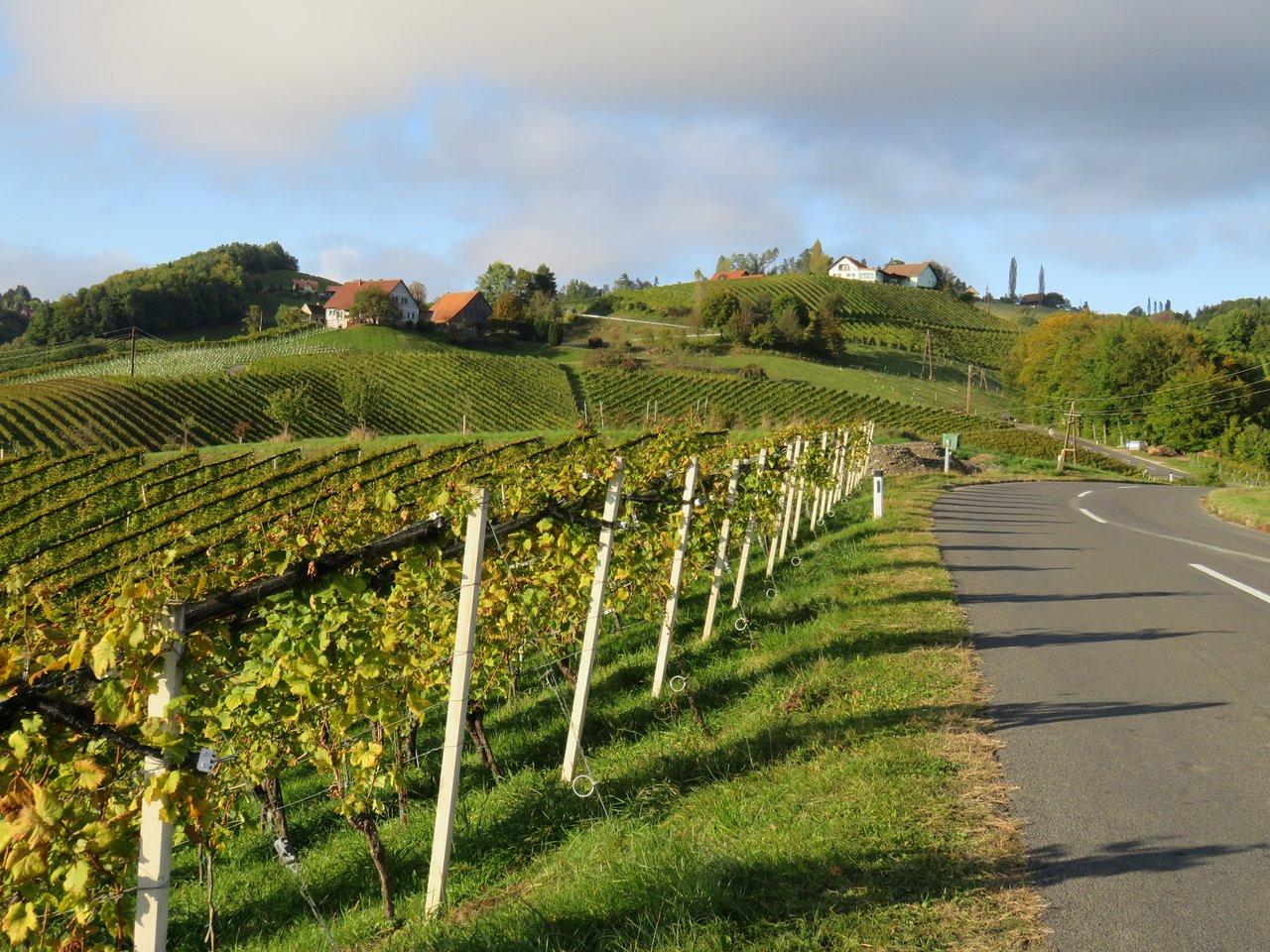 Forstunfall in Leutschach an der Weinstrae endet glimpflich