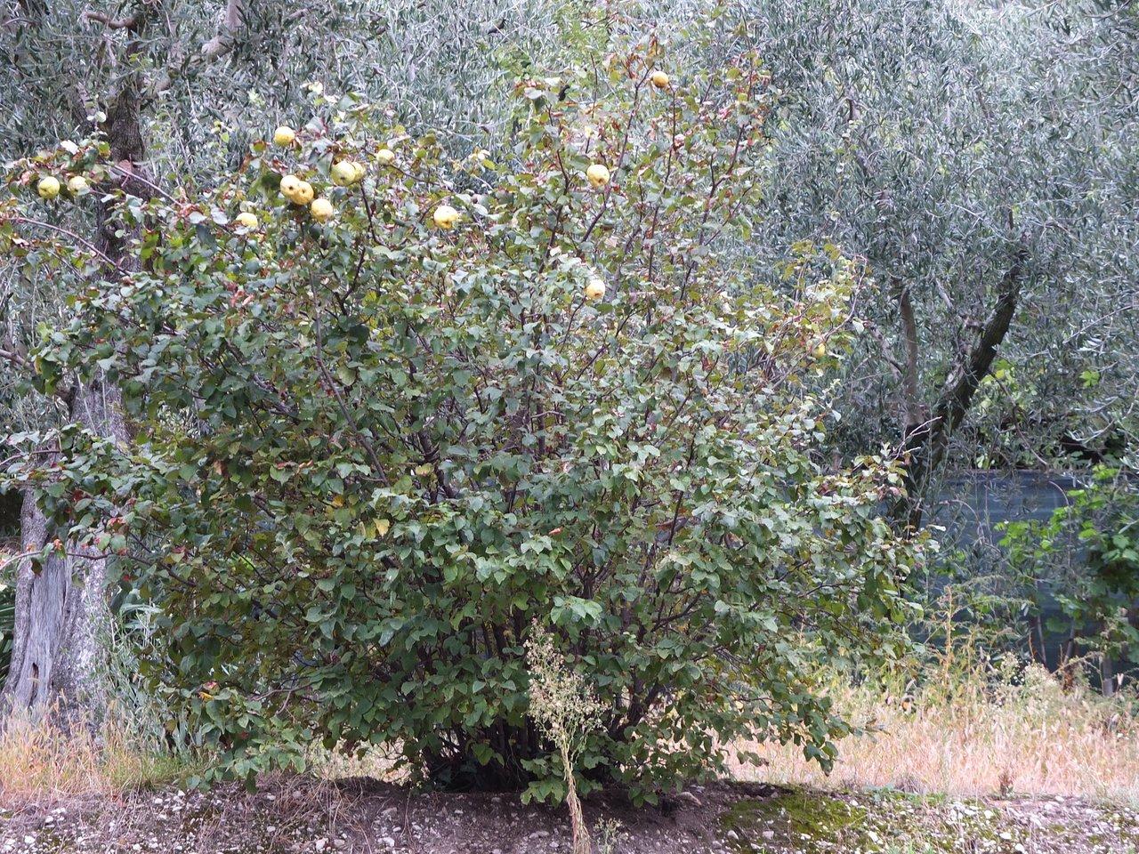 Let's go Limone (Limone sul Garda, Włochy) opinie