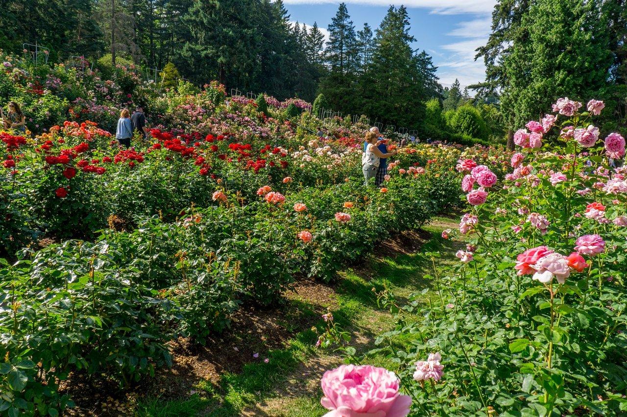 International Rose Test Garden Portland 2021 All You Tripadvisor