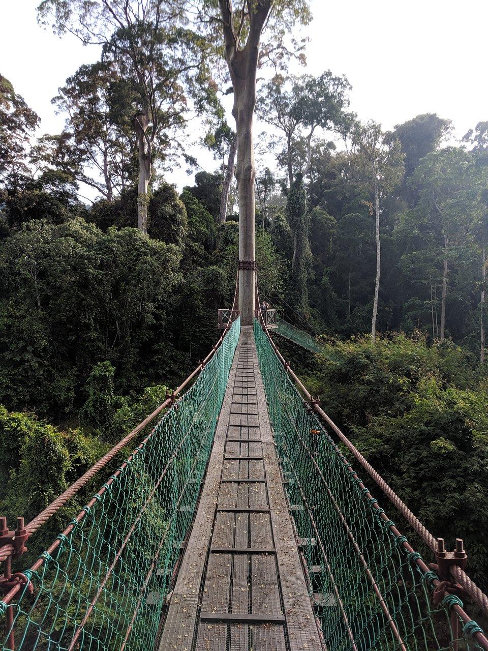 Nikmati Alam Semula Jadi Dengan Style Di Borneo Rainforest Lodge, Lembah Danum