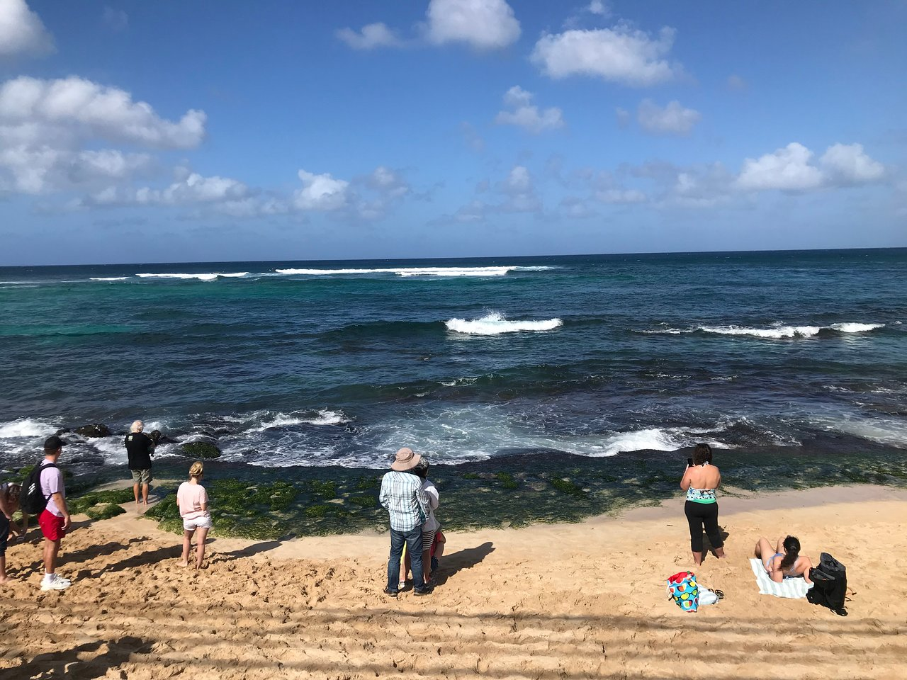 Laniakea Beach Haleiwa 2020 All You